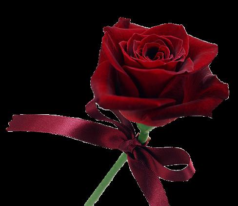 Flowers picture güller sarı gül siyah çiçek aşk gülleri kırık