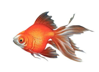 download poisson clear fish -#main