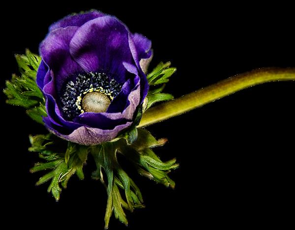 Çiçekler burda gül resimleri hareketli gül çiçek resimler