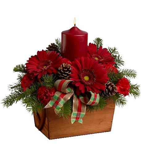fleur de Noël