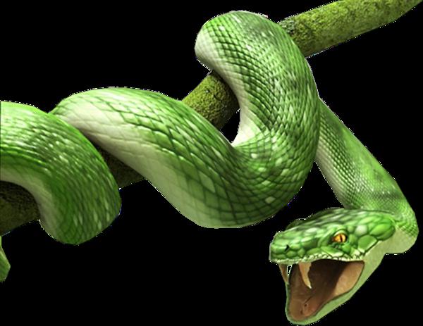 клипарт год змеи - Евро 2012 Олимпийские Кольца